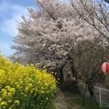 4/2土曜日 春の地域交流会盛大に開催されましたの画像